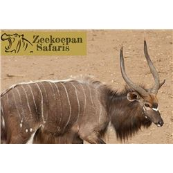 Zeekoepan Safaris