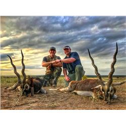 Argentina Big Game Hunt for Two Hunters. Includes 1 Blackbuck & 1 Patagonian Ram