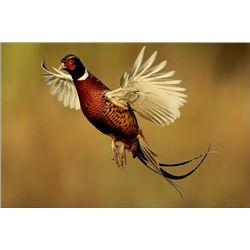 6 Bird Wisconsin Pheasant Hunt