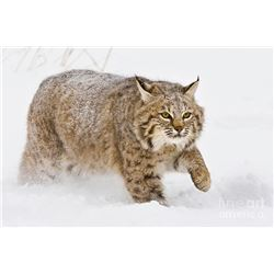 3 Day Predator Hunt in Kansas