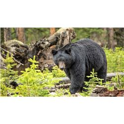 Idaho Black Bear hunt for 2