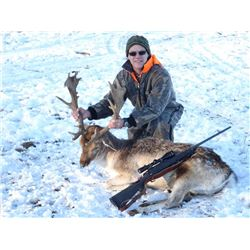 Trophy Fallow Deer Hunt in Wisconsin