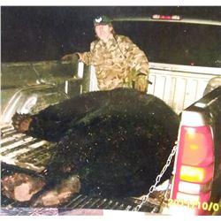 BIG Black Bear hunt in Minnesota