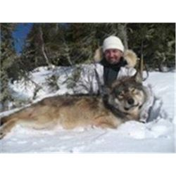 """Chase the """"Grey Ghost of the North"""" 6-night/5-day Trophy Wolf Hunt  Kapuskasing, Ontario for 1 Hunte"""