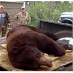 """Stalk a """"Canadian Black Bear"""" or Pursue the """"Cinnamon Black Bear"""" Color Phase 6-night/5-day Black Be"""