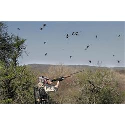 4-Day/3-Night High Volume Dove Safari  For 3 Hunters with OC Outfitters, Córdoba, Argentina