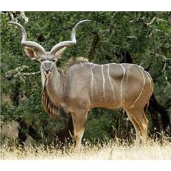 EASTERN CAPE S. AFRICA HUNT FOR ONE HUNTER ONE NON HUNTER WITH CAPE KUDU