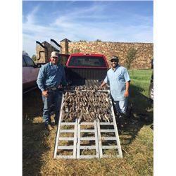 South Texas Quail Hunt for 4 Hunters