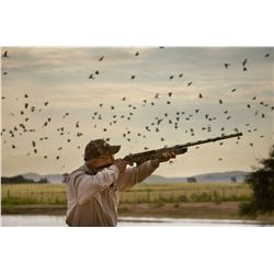 Argentina Dove Hunt for 2 hunters