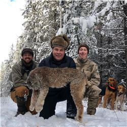5 Day Lynx hunt in British Columbia