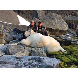 Costal British Columbia Mt. Goat Hunt for 1 Hunter