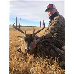 6 Day Alberta Whitetail Rut Hunt