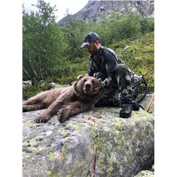 Middle-Eastern Brown bear hunt in Russia for 1 hunter