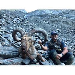 Eastern (Dagestan Tur) Hunt in Azerbaijan
