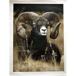 "The 2020 SCI Artist of the Year limited edition, artist signed print, ""Mountain Ram"""