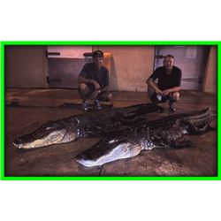 1 American Alligator from boat for 1 hunter