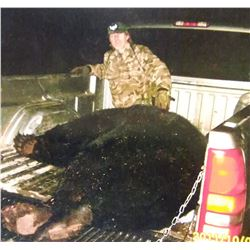 7-Day Trophy Black Bear Hunt in Minnesota for 1 hunter
