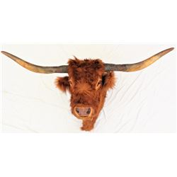 Longhorn Steer Mount