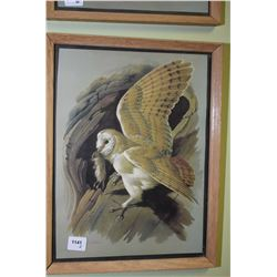 Two framed prints of birds