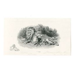 James Smillie Proof Engraving of Lion at Home ca. 1885 with small Self Portrait of Smillie With His