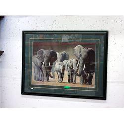 Very Large Framed Print of Elephants