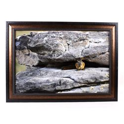 Original Yellowstone Squirrel Signed Framed Photo