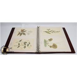 ALBUM WITH 64 LITHOGRAPHED BOTANICAL PLATES FROM