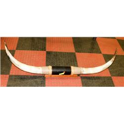 WALL HANGING STEER HORNS (DAMAGED HORN)