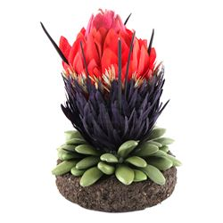 Lot # 643: Small Nightshade Plant