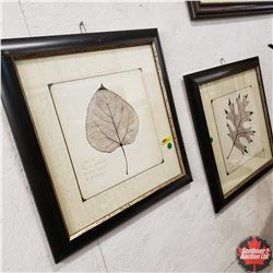 """Pair of Framed Prints by Booker Morey """"Cotton Wood"""" & """"Black Oak"""" (Both 20"""" Square)"""
