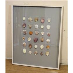 "Large Framed Natural Seashells 33""W x 42"""