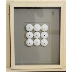 "Framed White Sea Urchin Shells 12"" x 15"""