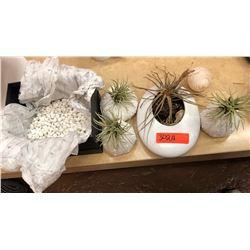Succulent Planter, Decorative Sea Urchin Planters, Sea Shell, White Stones