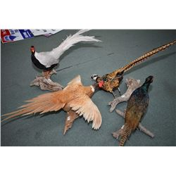 Lot of Four Stuffed Pheasants mounted on driftwood