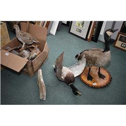 Lot of Three Items - Stuffed Canada Goose - Mallard Duck - Box Lot of Four Stufted Birds
