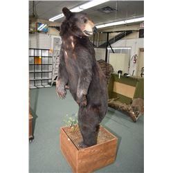 Large Full Mount Black Bear on wooden base