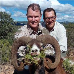 Red deer, Fallow deer OR Mouflon sheep (Hunter's Choice).