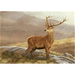 4 Days / RED STAG HUNTING IS AVAILABLE FOR 3 HUNTERS AND OTHER BIG GAME