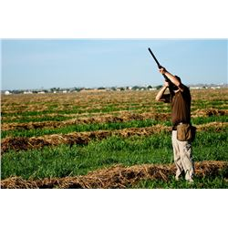2 Person Dove Hunt in Cordoba Village In Argentina With Lodging and Meals