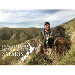 NEW ZEALAND  RED STAG HUNT AND ARAPAWA  RAM HUNT FOR 3 DAYS/ 4 NIGHTS FOR 4/  BULL TAHR AVAILABLE