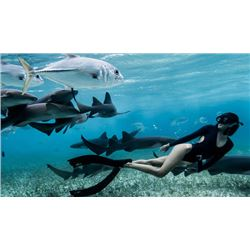 Diver Delight To  The Exciting Caribbean Destinations In Antigua (Your Choice)