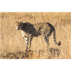 3 HUNTERS ALL INCLUSIVE PACKAGE TO NAMIBIA + Trophies For 6 DAYS + Luxury Chalet Lodging
