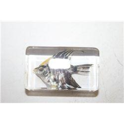 AngelFish Specimen Paper Weight