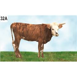 JACKIE LYNN 4274