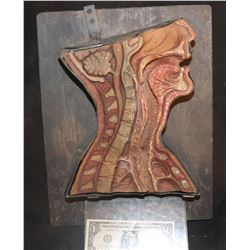 ALIEN 3 HUMAN THROAT CROSS SECTION THAT SHOWED FACEHUGGER IMPALING A VICTIM