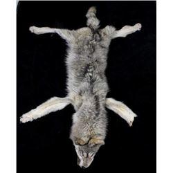 Large Alaska Taken Taxidermy Trophy Wolf Hide