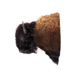 RARE Montana Bull Bison Pro Taxidermy Wall Mount