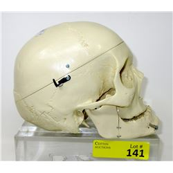 Resin Skull with Movable Jaw & Removable Top