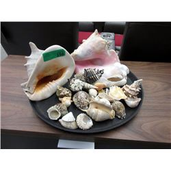 """Tray of Genuine Sea Shells - Largest is 8"""" x 9"""""""