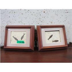 2 Framed Green River Formation Fossils
